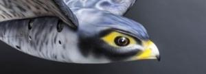 Ρομποτικό πουλί διώχνει τα πουλιά στα αεροδρόμια 12/05/2017