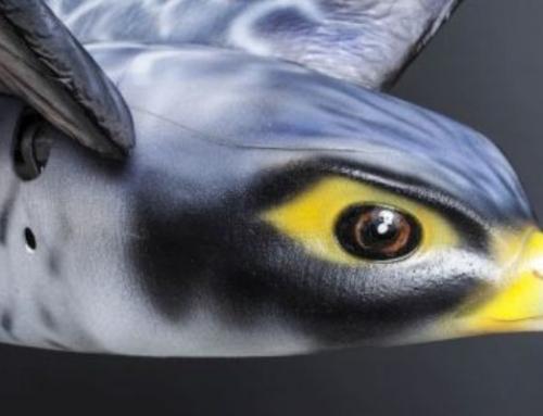 Ρομποτικό πουλί διώχνει τα πουλιά στα αεροδρόμια